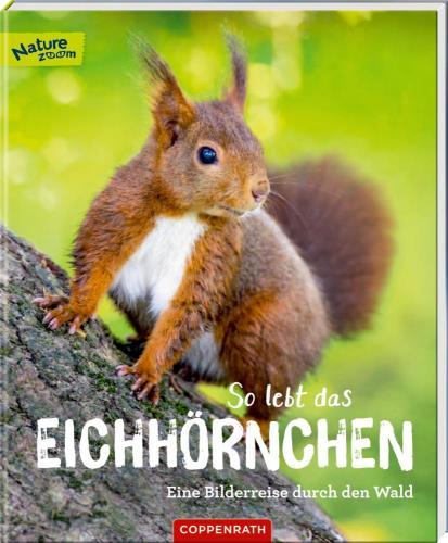So lebt das Eichhörnchen: eine Bilderreise durch den Wald